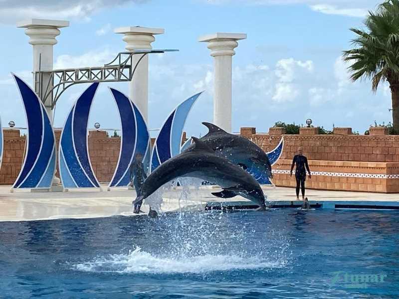 Шоу Дельфинов SEALANYA DOLPHINPARK в Алании