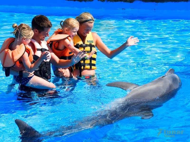Плавание с дельфинами в SEALANYA в Алании